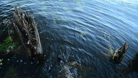 Ein kleiner Bereich des Wasserlebens stock video footage