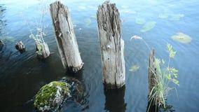 Ein kleiner Bereich des Wasserlebens stock footage