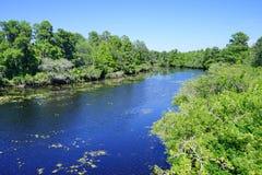 Ein kleiner blauer See und ein Baum stockfotografie