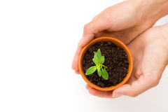 Ein kleiner Blumentopf und eine Grünpflanze stockfotos