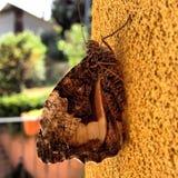 Ein kleiner brauner Schmetterling lizenzfreies stockfoto