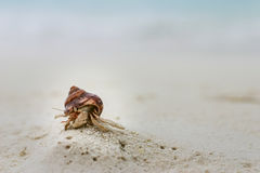 Ein kleiner Einsiedlerkrebs auf einem weißen Sand-Strand bei Malediven Lizenzfreie Stockfotografie