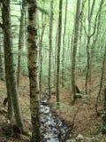 Ein kleiner Fluss in einem Wald Lizenzfreie Stockfotos