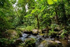 Ein kleiner Fluss im grünen dichten Dschungel Lizenzfreies Stockbild
