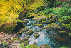 Ein kleiner Fluss und ein Wald Lizenzfreies Stockbild