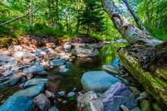 Ein kleiner Frühlingsnebenfluß in Wisconsin Lizenzfreie Stockfotografie