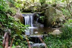 Ein kleiner Gartenwasserfall im üppigen Laub stockbild