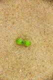 Ein kleiner grüner Sprössling, der aus mit gelbem Sand auf Strand heraus wächst Lizenzfreies Stockbild