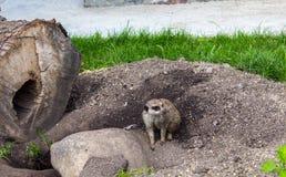 Ein kleiner grauer Schreiber am Zoo lizenzfreie stockfotos