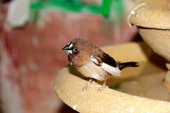 Ein kleiner grauer Vogel Lizenzfreie Stockbilder