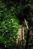Ein kleiner hölzerner Steg im Dschungel, Cordiliera zentral stockfotos
