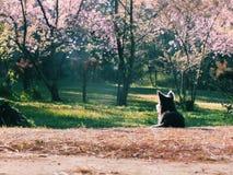 Ein kleiner Hund in der rosa Blumenblüte Lizenzfreie Stockfotos