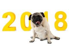 Ein kleiner Hund sitzt auf dem Hintergrund der Aufschrift 2018 Getrennt auf weißem Hintergrund Lizenzfreies Stockbild