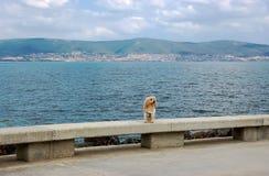 Ein kleiner Ingwerhund, der auf dem Hintergrund des Meeres sitzt Stockfotografie