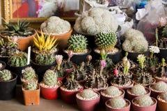 Ein kleiner Kaktus in einem Topf stockbild
