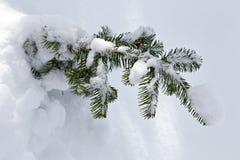 Ein kleiner, lebender Baum im Schnee Stockfotografie
