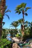 Ein kleiner Nebenfluss mit Steinbanken fließt wachsende Palmen durch Lizenzfreie Stockfotos