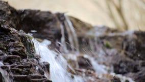 Ein kleiner Nebenfluss und Wasserfälle im Herbstwald stock video