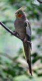 Ein kleiner Papagei auf der Niederlassung Lizenzfreies Stockbild
