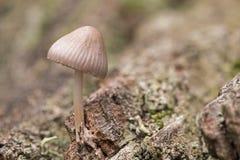 Ein kleiner Pilz Stockbilder