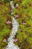 Ein kleiner Plan der Vegetation mit einer großen Vielfalt des lebenden Organismus stockfotos