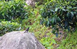 Ein kleiner schwarzer Vogel, der auf einem großen Stein betrachtet einen grünen Baum sitzt lizenzfreie stockfotografie