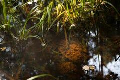 Ein kleiner See im Wald Stockbild