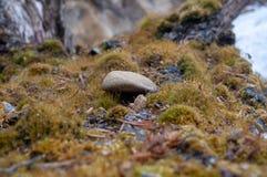Ein kleiner Stein, der auf einem Moos liegt Stockfoto