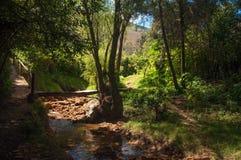 Ein kleiner Strom in einem Wald lizenzfreie stockfotos