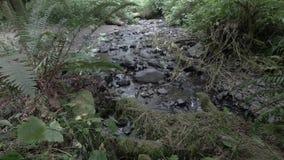 Ein kleiner Strom mit dem Ton des Wassers stock footage