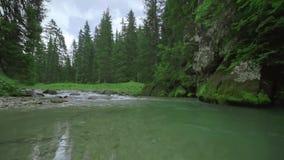 Ein kleiner Strom mit transparentem Wasser zwischen den Felsen der Berge der italienischen Alpen stock footage