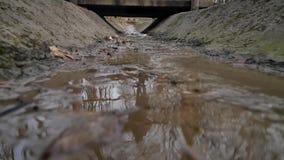 Ein kleiner Sumpf im Park stock video footage