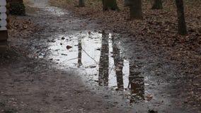 Ein kleiner Sumpf im Park stock footage