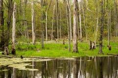 Ein kleiner Teich Lizenzfreies Stockbild