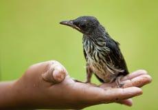 Ein kleiner Vogel Stockfotos