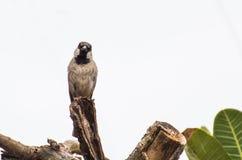 Ein kleiner Vogel auf dem Baum Stockbild