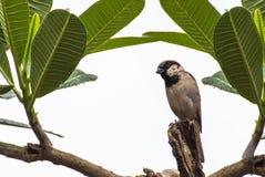 Ein kleiner Vogel auf dem Baum Stockfoto