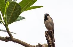 Ein kleiner Vogel auf dem Baum Stockfotos