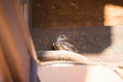 Ein kleiner Vogel, der aus einem Nest heraus flog lizenzfreies stockbild