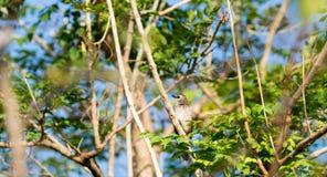 Ein kleiner Vogel ist auf einer Niederlassung Lizenzfreies Stockbild