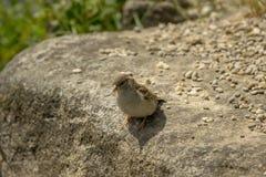 Ein kleiner Vogel sitzt auf einem Stein Stockbilder