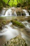 Ein kleiner Wasserfall auf Gebirgsstrom, schöne Wurzeln im Vordergrund Stockfotografie