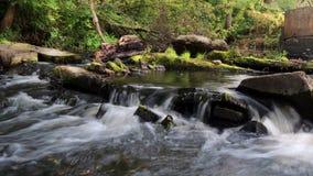 Ein kleiner Wasserfall im Wald Stockbild