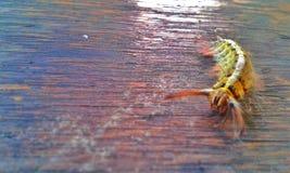 Ein kleiner Wurm stockfoto