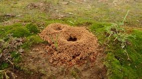 Ein kleines Ameisennest, Ameisen, die sich nach innen bewegen lizenzfreie stockbilder