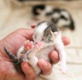 Ein kleines blindes Kätzchen in der Hand Stockbilder