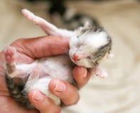 Ein kleines blindes Kätzchen in der Hand Lizenzfreie Stockfotografie