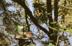 Ein kleines Boot von der Barke eines Baums und des Blattes, die auf schwimmen stockbilder