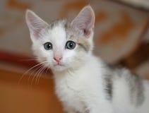 Ein kleines erschrockenes weißes Kätzchen Stockbild