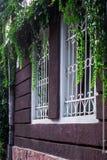 Ein kleines Fenster in einem weißen Rahmen Backsteinmauer geflochten mit wilden Trauben Töpfe mit Anlagen am Fenster Stockbild